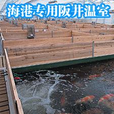 阪井海港專用溫室精選