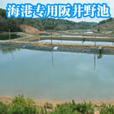 阪井海港專用野池精選