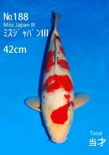 188 42cm-mj3