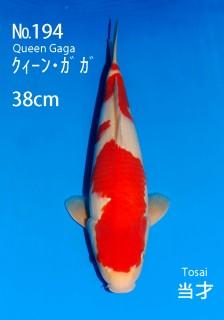 194 38cm-gaga