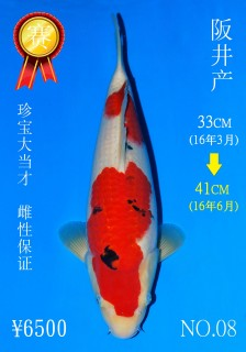 NO.08 5_DSC_0118-41cm