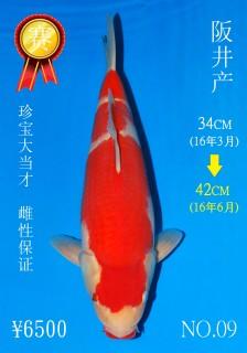 NO.09 5_DSC_0112-42cm
