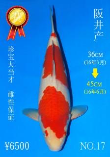 NO.17 5_DSC_0178-45cm