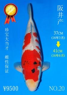 NO.20 5_DSC_0145-41cm