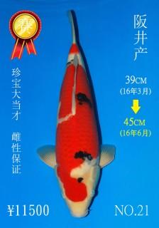 NO.21 5_DSC_0179-45cm