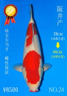 NO.24 5_DSC_0141-46cm