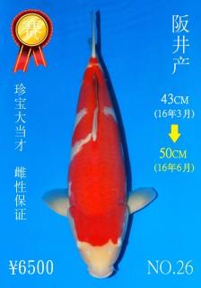 NO.26 4_DSC_0158-50cm