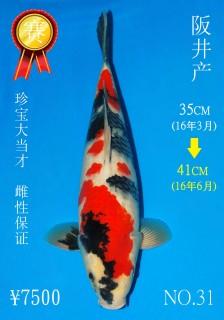 NO.31 4_DSC_0054-41cm