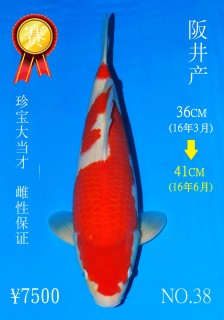 NO.38 4_DSC_0115-41cm