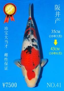 NO.41 4_DSC_0047-43cm