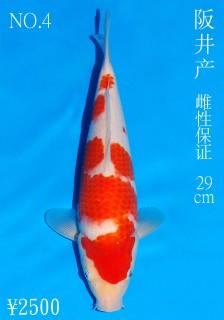 No.4 DSC_1126 29cm DSC_0197 29cm