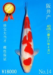 14 40cm DSC_1009_Golden Eye