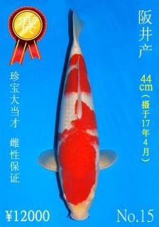 15 44cm DSC_0992_Miss Japan