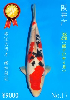 17 38cm DSC_8209_J Dragon