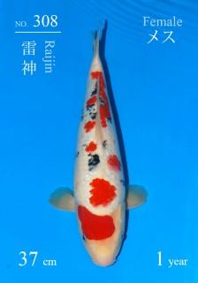 308 16w DSC_8253-37cm-Raijin