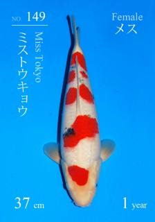 149DSC_2768-37cm-tokyo