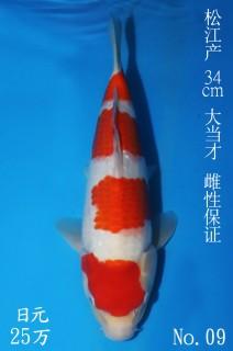 9 34cm 7