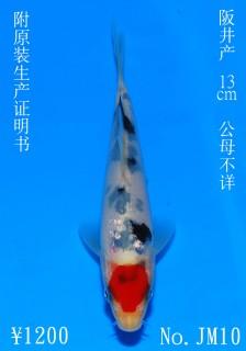 JM10_1200 DSC_0760-13cm