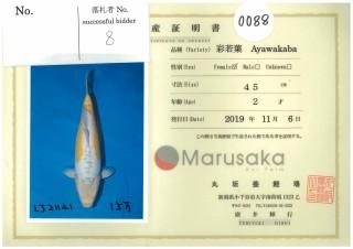Ayawakaba-0088