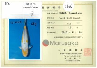 Ayawakaba-0160