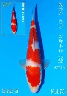 173 DSC_2183-22cm