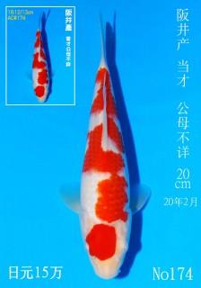 174 DSC_2188-20cm