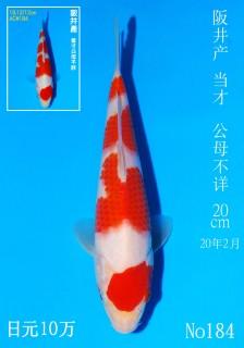 184 DSC_2215-20cm
