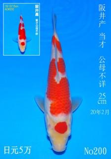 200 DSC_3887-25cm