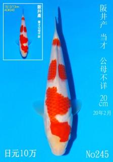 245 DSC_2171-20cm