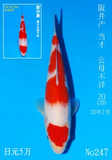 247 DSC_2131-20cm