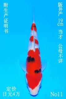 11 DSC_0896-19cmn