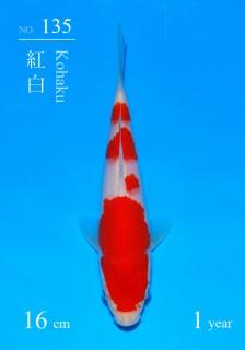135 5w DSC_2764-16cm