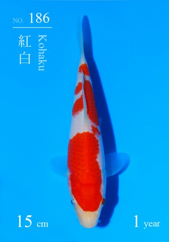 186DSC_1213-15cm