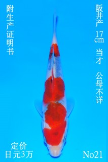 21 DSC_0856-17cm
