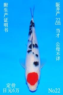 22 DSC_0732-22cm