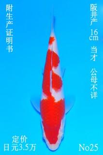 25 DSC_0846-16cm