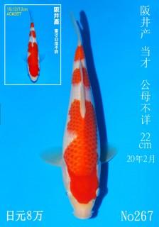 267-DSC_2243-22cm