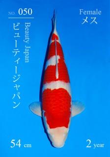 51w 050DSC_2118-54cm-3.2kg-19BeautyJapan