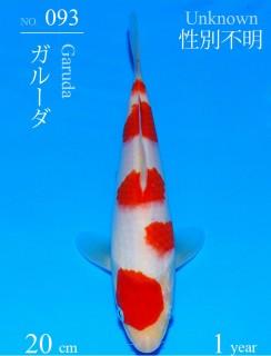 093DSC_0931-20cm-20Garuda
