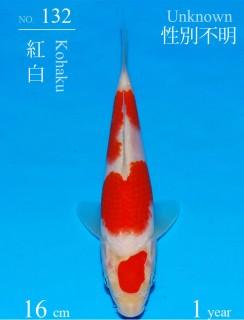 132DSC_9065-16cm