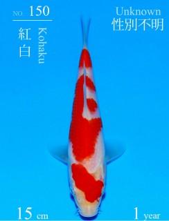 150DSC_8832-15cm