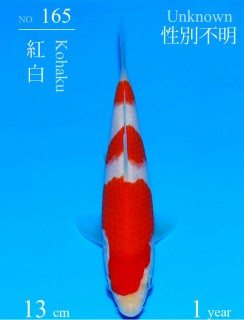 165DSC_1130-13cm