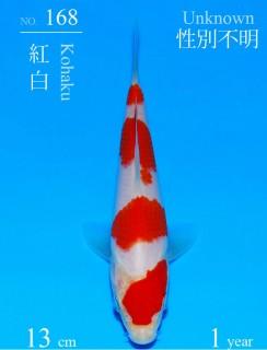 168DSC_1183-13cm