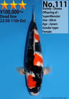 111_60cm_SuperMonster_s3